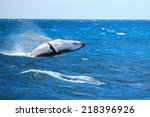 a hump back whale breaching in... | Shutterstock . vector #218396926