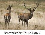 deer | Shutterstock . vector #218645872
