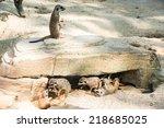 A Meerkat Is Guarding His...