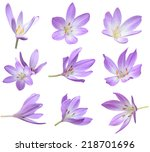 Fall Flowers  Violet Crocus...