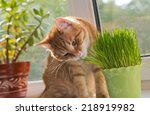 Cat Sniffing And Munching A...