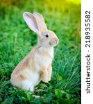 Stock photo little rabbit standing on hind legs in the grass 218935582