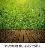 fresh spring green grass and... | Shutterstock . vector #219079348