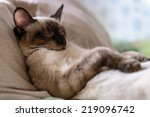 Stock photo cat beni sleep 219096742
