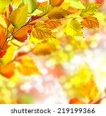 autumn foliage | Shutterstock . vector #219199366