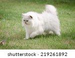 White Persian Cat Walking On...