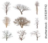 Conlection Of Trees Without...