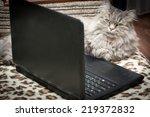Stock photo cat lying near the laptop 219372832