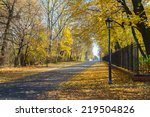 Road In Autumn Park With Golde...
