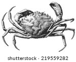 Illustration With A Large Crab...