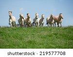 Herd Of Horses Running On...