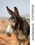 Donkey  Farm Animal In The...