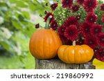 Short And Tall Mini Pumpkins O...