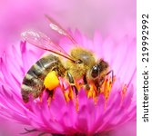 The european honey bee  apis...