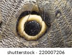 Close Up On The Wing Of An Owl...