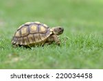 Stock photo african spurred tortoise 220034458