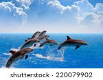 Jumping Dolphins  Blue Sea And...