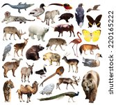 bear and other asian animals.... | Shutterstock . vector #220165222
