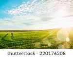 morning landscape with green...   Shutterstock . vector #220176208