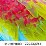 Close Up Of Colorful Feathers...