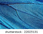 Texture Of Butterfly Wing  Blu...