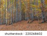 silver beech tree  against the... | Shutterstock . vector #220268602