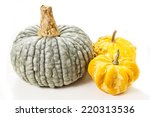 Colorful Pumpkins. Halloween...