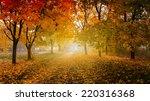 golden autumn in sunny forest ... | Shutterstock . vector #220316368