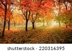 golden autumn in sunny forest ... | Shutterstock . vector #220316395