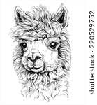 realistic sketch of lama alpaca ... | Shutterstock .eps vector #220529752