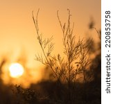 branches of a tree at sunset | Shutterstock . vector #220853758