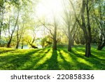 Summer Forest With Sun And...