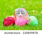 Stock photo cute kitten playing with clews of thread on green grass 220859878