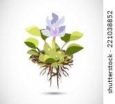 Water Hyacinth   Vector...