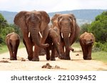Постер, плакат: A herd of elephant