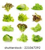 fresh green lettuce isolated on ... | Shutterstock . vector #221067292
