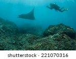 Постер, плакат: A diver photographs a