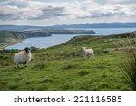 Sheep In Scotland
