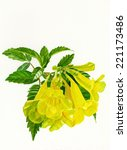 Yellow Bell Flower. Watercolor...