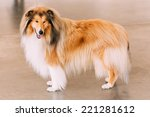 Red Rough Collie Dog Full...