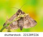 trachea atriplicis | Shutterstock . vector #221289226