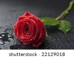 Beautiful Red Rose With Water...