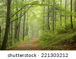 Path In Early Autumn Forest On...