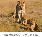 Lioness And Three Cubs Walking...