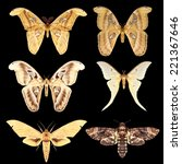 Small photo of collection of Giant Moth Actias maenas and night tropical butterfly moth with open wings in a top view as a only coming out at night isolated on black background with clipping path