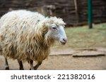 sheep | Shutterstock . vector #221382016