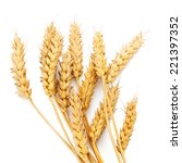 wheat ears on white background | Shutterstock . vector #221397352