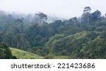 tropical rainforest khao yai... | Shutterstock . vector #221423686