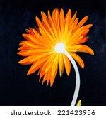 orange flower oil painting on... | Shutterstock . vector #221423956