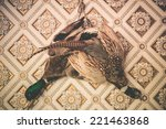 Pheasant and Duck Taxidermy on the Vintage Wallpaper Wall. Vintage Color Grading. - stock photo